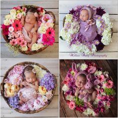 Newborns » Willow Baby Photography