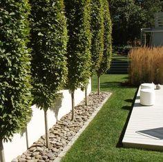 ideas for garden border | www.lomets.com #Gardendesignideas Privacy Trees, Privacy Fences, Kitchen Countertops, New Kitchen, Evergreen, Shrubs, Sidewalk, Shade Shrubs, Walkway