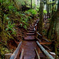 Hiking in HOH rainforest, WA.