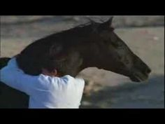 Tribute to the Black Stallion, i love this. it so beautyfull Horse Movies, Horse Videos, Black Stallion, Black Horses, Horse World, Beautiful Horses, Beautiful Creatures, Good Movies, Make Me Smile
