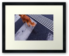 #photography #photo #art #print #artprint #streetphotography #streetphoto #color #colour #colorphoto #dogs #pets #doggie #street #frame #framedprint #findyourthing #photographs #artforsale #wallart #prague #czechia #czechrepublic #animals #run #crossing #zebra #fast #reddog #gingerdog