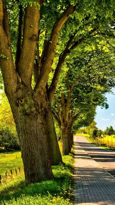 🇩🇪 Sunny country road (northern Germany) by Bettina Lichtenberg cr. Studio Background Images, Light Background Images, Photo Background Images, Background For Photography, Photo Backgrounds, Background Images For Editing, Digital Backgrounds, Beautiful Landscape Wallpaper, Beautiful Landscapes
