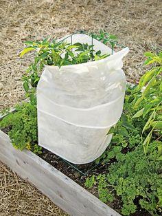Plant Protection Wrap, 6'