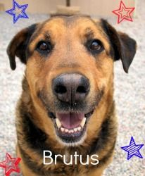 John Brutus Adams is looking for a family to love. Bring him into your home today!