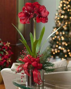 Our tall silk amaryllis is a classic holiday floral design and is always in bloom, unlike its short lived, real counterpart. Combined in a silver glazed ceramic cache pot are mixed pine, candy apple red berries and a red satin bow. Winter Flower Arrangements, Christmas Arrangements, Christmas Centerpieces, Floral Arrangements, Christmas Candles, Christmas Bulbs, Christmas Flowers, Winter Flowers, Silk Flowers