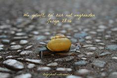 Wie gelooft, zal zich niet weghaasten. Jesaja 28:16  #Geloof, #Rust, #Veiligheid, #Vertrouwen  https://www.dagelijksebroodkruimels.nl/jesaja-28-16/