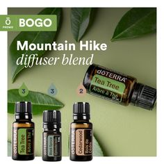 Whether you are jonesing for a mountain hike, but stuck indoors, invigorate your senses by diffusing doTERRA's Tea Tree, Black Spurce, and Cedarwood!  See link for how to get yours.   Don't Forget... becoming a wholesale customer provides you benefits like discounts... free oils + more... (wink wink). See bio link to become a wholesale member.  Today (July 22) only, you can Buy Tea Tree 15 mL, get Citronella 15 mL FREE! Hangover Essential Oils, Essential Oils Cleaning, Reiki, Essential Oil Combinations, Healing Oils, Essential Oil Diffuser Blends, Doterra Essential Oils, Buy Tea, Wink Wink
