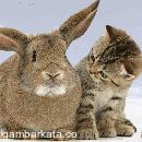 DP BBM Kucing Lucu Bergerak Terbaru