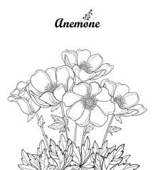 Vector Bouquet With Outline Anemone Flower Or Windflower Bud And Leaves In Black Isolated On White Background Orn Flower Illustration Flower Drawing Drawings
