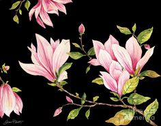 Magnolias-black-jp3874 Painting by Jean Plout