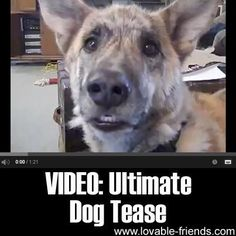 This is very funny (and famous) video that will show you exactly what dogs are telling you when you are teasing with food.