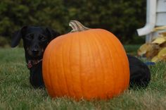 Fall photo ideas for pets!