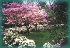 Located in Locust Valley, Long Island, New York, The Locust Valley Cemetery provides beautiful garden grounds to honor your loved ones. Locust Valley, Landscape Architects, Woodland Garden, Central Park, Small Towns, Cemetery, Beautiful Gardens, Garden Landscaping, Preserve