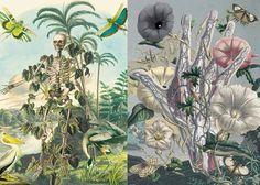 Juan Gatti   Botany and Anatomy Entwined inspiration