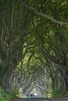 The Dark Hedges, Ballymoney, Co. Antrim