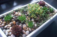 Succulent Garden - A Modern Succulent Display