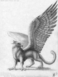 Griffin 3 by axe-ql on DeviantArt Mythological Creatures, Fantasy Creatures, Mythical Creatures, Pencil Art Drawings, Easy Drawings, Art Sketches, Fantasy Life, Fantasy Art, Griffin Drawing
