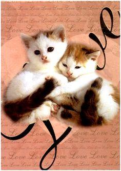 Finnish Valentine postcard kittens
