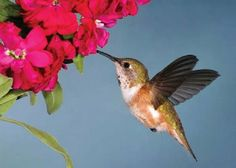 Montessori Outdoor Activities: Growing a Hummingbird and Butterfly Habitat - Tips on creating an outdoor environment that will attract butterflies, birds and insects that will bring your classroom closer to nature and provide many opportunities for observation!