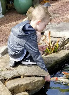 Kids love to feed the Koi out of their hand. Koi, Garden Sculpture, Jackson, Nursery, Patio, Fish, Outdoor Decor, Baby Room, Pisces