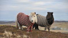 Animals___Horses_Ponies_in_sweaters_096521_.jpg (1920×1080)