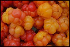 Fotografi   Dommerfrue Fruit, Vegetables, Food, The Fruit, Veggies, Vegetable Recipes, Meals, Yemek, Eten