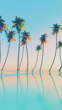 Wallpaper|Iphone|Palmtrees|