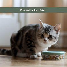 Probiotics for Pets?