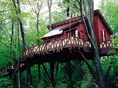 Now this is a treehouse!!