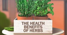 Learn what 9 of the most common herbs can do to boost your health and wellbeing. Healing Herbs, Medicinal Herbs, Growing An Avocado Tree, Tomato Nutrition, Proper Nutrition, Coconut Health Benefits, Healthy Oils, Healthy Habits, Natural Cures