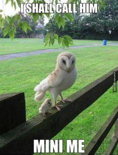 Big owl & little owl