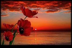 Papaveri e tramonti