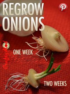 Growing Vegetables Regrow Onions from Scraps Edible Garden, Vegetable Garden, Garden Plants, Growing Onions, Growing Veggies, Organic Gardening, Gardening Tips, Regrow Vegetables, Grow Your Own Food