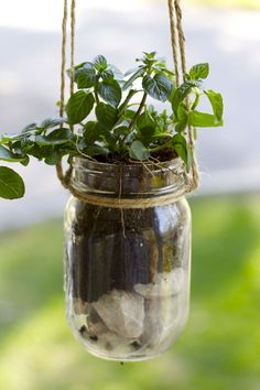 How to make a mason jar planter. How to make a hanging mason jar planter. Can you plant herbs in mason jars? Mason Jar Garden, Mason Jar Herbs, Mason Jar Planter, Hanging Mason Jars, Mason Jar Diy, Mason Jar Twine, Diy Hanging Planter, Hanging Herbs, Hanging Pots