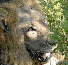 Safari Südafrika Animals, Tour Operator, Cape Town, Nature Reserve, Wilderness, Art Gallery, Animales, Animaux, Animal
