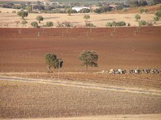 ALENTEJO The Rhythm of the seasons | Enjoy Portugal Holidays https://www.facebook.com/enjoyportugalcountry
