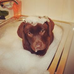 Bath time for the puppy!