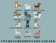Los Angeles-based illustrator Lili Chin created 'Dogs Of The World', a series of delightful posters featuring more than 200 popular dog breeds grouped by their countries of origin. Cane Corso, Animals And Pets, Cute Animals, Illustrator, Different Dogs, Dog Illustration, Italian Greyhound, Dog Boarding, Dogs Of The World