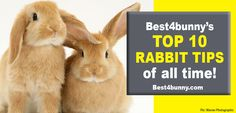 Best 4 Bunny has links to the best rabbit-related products to save you the time and trouble Bunny Care, House Rabbit, Very Scary, Just Giving, Exotic Pets, All About Time, Bunnies, Tips, Advice