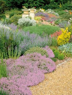 Dry garden with drought tolerant ground cover low maintenance plants thymes nepeta helianthemums summer flower July. Dry Garden, Gravel Garden, Garden Urns, Landscape Design, Garden Design, Drought Tolerant Landscape, Ground Cover Plants, Backyard Landscaping, Landscaping Ideas