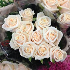Pretty creamy rose called 'Vendella'  Sold in bunches of 20 stems from the Flowermonger the wholesale floral home delivery service.