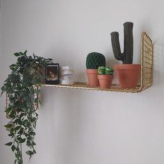 Green deco Crochet Cactus, Room Accessories, Floating Shelves, Places, Green, House, Home Decor, Interiors, Creative Workshop