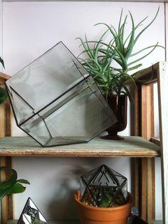 halona glass