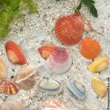 colorful Sanibel shells