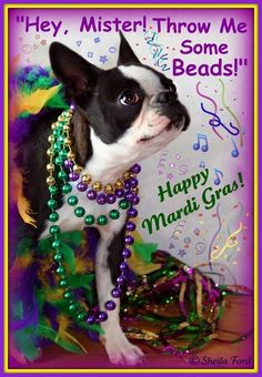 2 of my favorite things!! Bostons and Mardi Gras!