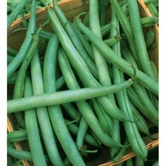 """State Half Runners are an old fashioned favorite that thrive in the harshest growing environments. Great as green or dried, this variety produces 4"""" to 5"""" pods that are heat and drought resistant. Matures in 52 days."""