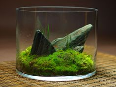 ideas about Moss Terrarium on Pinterest Terrarium