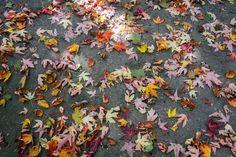 Beautiful colours this Autumn morning #autumnfeels #autumn