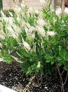 Die Zimterle bringt Vanilleduft in den Garten The cinnamon brings vanilla fragrance into the garden. Diy Garden Projects, Diy Garden Decor, Amazing Gardens, Beautiful Gardens, Garden Paths, Garden Landscaping, Modern Planting, Long Flowers, Modern Garden Design