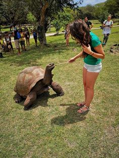 Hranind broaste etstoate in mauritius - Casela Adventure Park Mauritius - Feeding Turtles - Giant turtles - traveler - adventurer - life on an island - viata pe insula - madalinapintea. Adventurer, Mauritius, Turtles, Island, Vacation, Park, Life, Tortoises, Vacations
